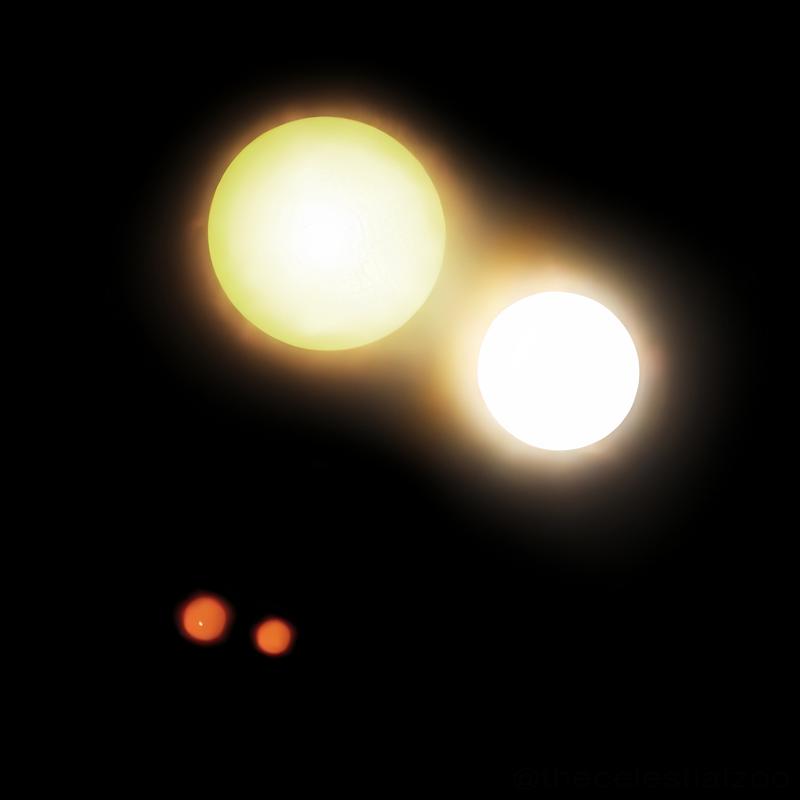 Raffigurazione del sistema quadruplo Capella, la stella Amaltea