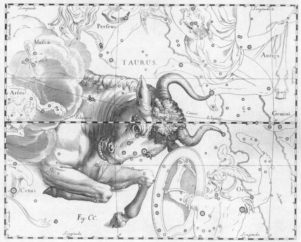 La costellazione del Toro illustrata da Hevelius, un astronomo polacco.