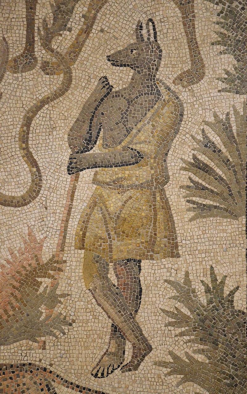 Dettaglio di Anubi in foggia greco-romana, in un mosaico di una villa romana del II-III secolo d.C. Rimini, Museo della Città.